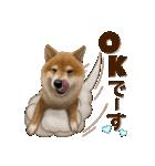 さすが!柴犬【万能型】(個別スタンプ:06)
