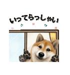 さすが!柴犬【万能型】(個別スタンプ:11)