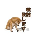 さすが!柴犬【万能型】(個別スタンプ:19)