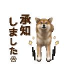 さすが!柴犬【万能型】(個別スタンプ:20)