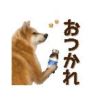 さすが!柴犬【万能型】(個別スタンプ:21)