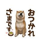 さすが!柴犬【万能型】(個別スタンプ:23)