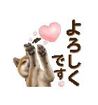さすが!柴犬【万能型】(個別スタンプ:27)