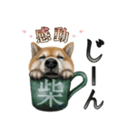 さすが!柴犬【万能型】(個別スタンプ:33)