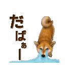 さすが!柴犬【万能型】(個別スタンプ:34)