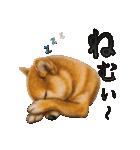 さすが!柴犬【万能型】(個別スタンプ:35)