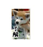 ぎんのスタンプ(個別スタンプ:01)