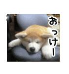 ぎんのスタンプ(個別スタンプ:03)