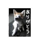 ぎんのスタンプ(個別スタンプ:04)