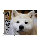 ぎんのスタンプ(個別スタンプ:05)