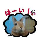 写真のふきだし(個別スタンプ:01)