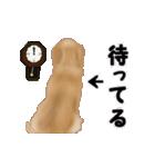 動く!ゴールデンレトリバー(個別スタンプ:20)