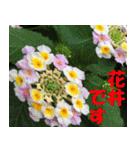 花井さんの名前スタンプ(個別スタンプ:1)