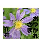 花井さんの名前スタンプ(個別スタンプ:4)