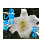 花井さんの名前スタンプ(個別スタンプ:8)