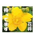 花井さんの名前スタンプ(個別スタンプ:11)