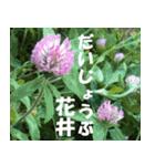 花井さんの名前スタンプ(個別スタンプ:12)