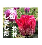 花井さんの名前スタンプ(個別スタンプ:13)