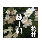 花井さんの名前スタンプ(個別スタンプ:14)