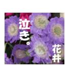 花井さんの名前スタンプ(個別スタンプ:16)