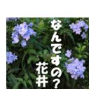 花井さんの名前スタンプ(個別スタンプ:17)