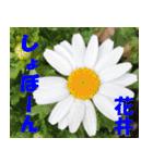 花井さんの名前スタンプ(個別スタンプ:21)