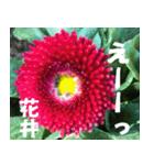 花井さんの名前スタンプ(個別スタンプ:22)