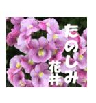 花井さんの名前スタンプ(個別スタンプ:27)