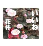 花井さんの名前スタンプ(個別スタンプ:29)