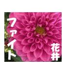 花井さんの名前スタンプ(個別スタンプ:32)