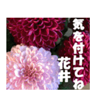 花井さんの名前スタンプ(個別スタンプ:35)