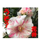 花井さんの名前スタンプ(個別スタンプ:36)