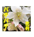 花井さんの名前スタンプ(個別スタンプ:37)