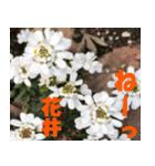 花井さんの名前スタンプ(個別スタンプ:38)