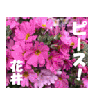 花井さんの名前スタンプ(個別スタンプ:40)