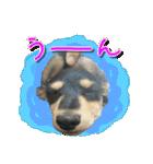 カラフル実写ダックスの子犬(個別スタンプ:2)