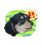 カラフル実写ダックスの子犬(個別スタンプ:3)