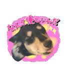 カラフル実写ダックスの子犬(個別スタンプ:4)