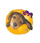 カラフル実写ダックスの子犬(個別スタンプ:5)