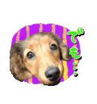 カラフル実写ダックスの子犬(個別スタンプ:6)