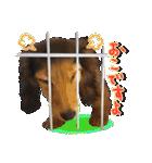 カラフル実写ダックスの子犬(個別スタンプ:10)