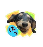 カラフル実写ダックスの子犬(個別スタンプ:15)