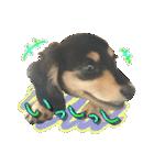カラフル実写ダックスの子犬(個別スタンプ:16)