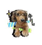 カラフル実写ダックスの子犬(個別スタンプ:17)