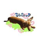 カラフル実写ダックスの子犬(個別スタンプ:18)