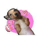 カラフル実写ダックスの子犬(個別スタンプ:19)