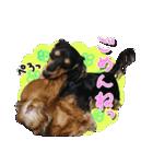 カラフル実写ダックスの子犬(個別スタンプ:23)