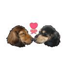 カラフル実写ダックスの子犬(個別スタンプ:24)