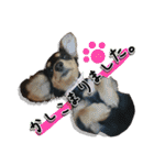 カラフル実写ダックスの子犬(個別スタンプ:27)