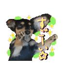 カラフル実写ダックスの子犬(個別スタンプ:28)